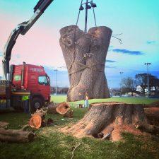 tree-felling-removal